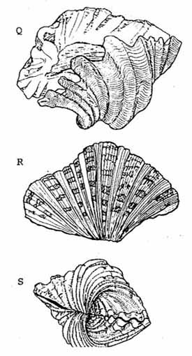 A GIANT CLAM STOCK SURVEY AND PRELIMINARY INVESTIGATION OF