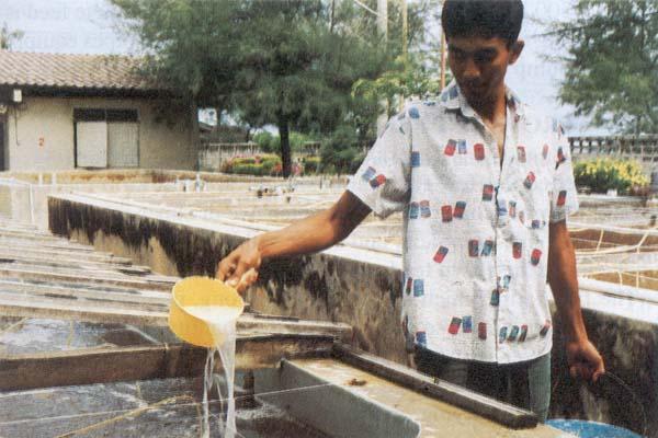 Farm-made aquafeeds