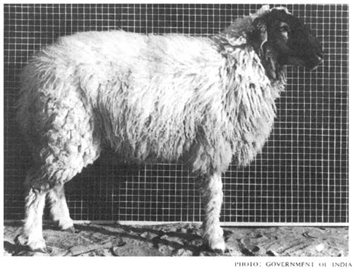 animal breeding: selected articles from the WORLD ANIMAL REVIEW