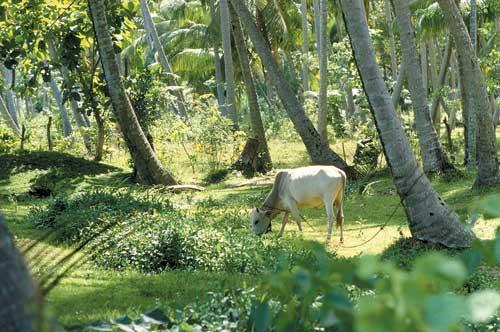 Mixed crop-livestock farming