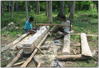 Small Scale Forestry