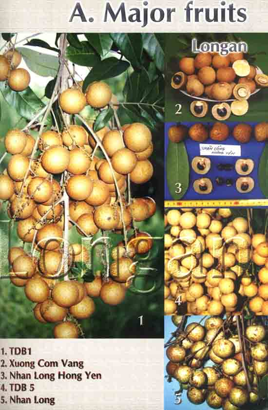 Fruits Of Vietnam