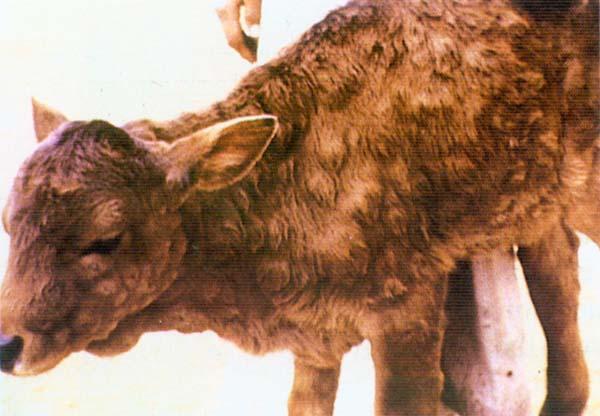 rotavirus disease in animals