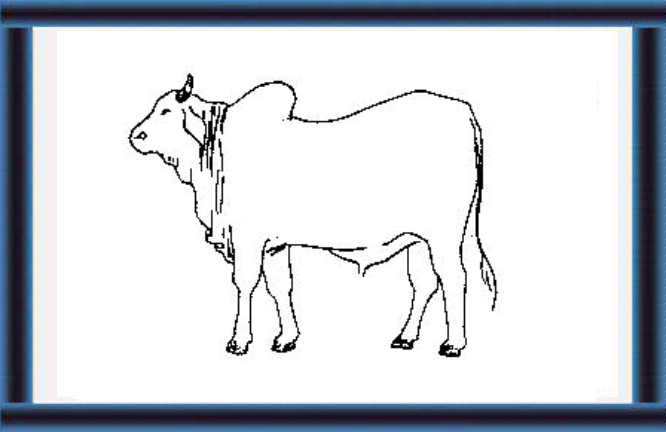 Small-Scale Dairy Farming Manual