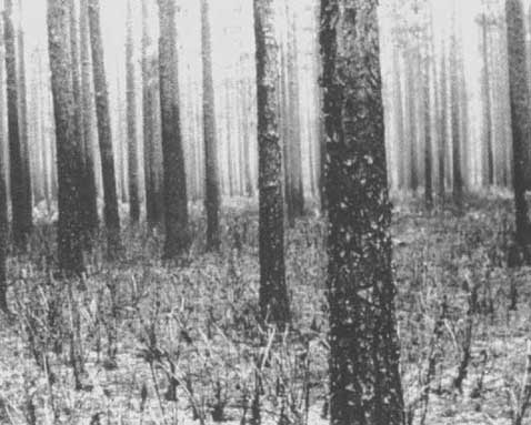Unasylva - No  162 - Fire! - Fire as a forest management