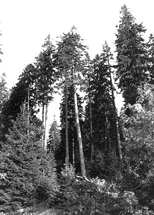Unasylva - No  174 - Forest resources assessment - The air