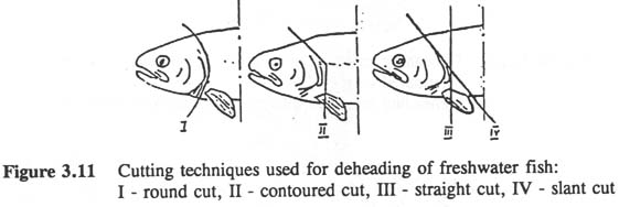 PRELIMINARY PROCESSING OF FRESHWATER FISH
