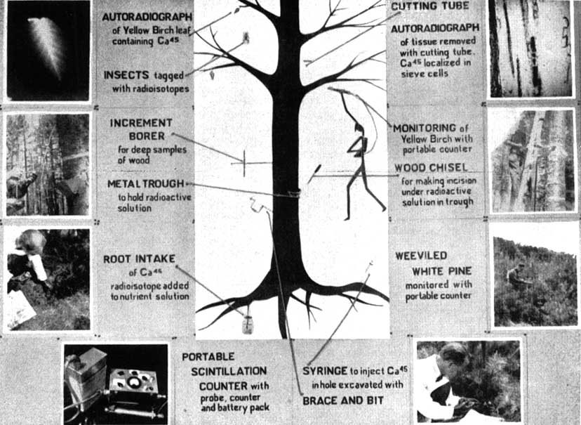Unasylva - Vol  9, No  4 - FAO's interest in atomic energy