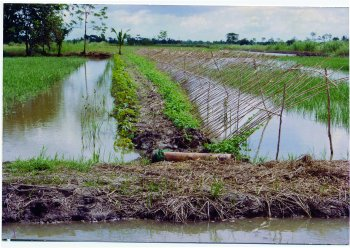 Farming freshwater prawns  A manual for the culture of the