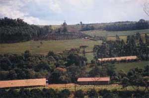 Selección De Cultivos Eficientes En El Uso Del Agua