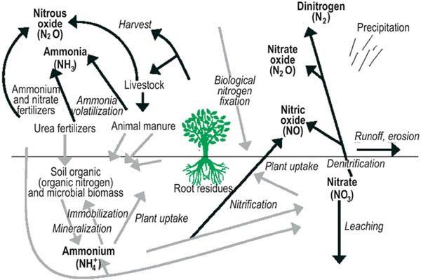 assessment of soil nutrient balance