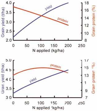 Optimizing Nitrogen use on the farm