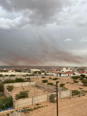سرب من الجراد الصحراوي في سماء هرجيسا، الصومال بتاريخ  14 أغسطس