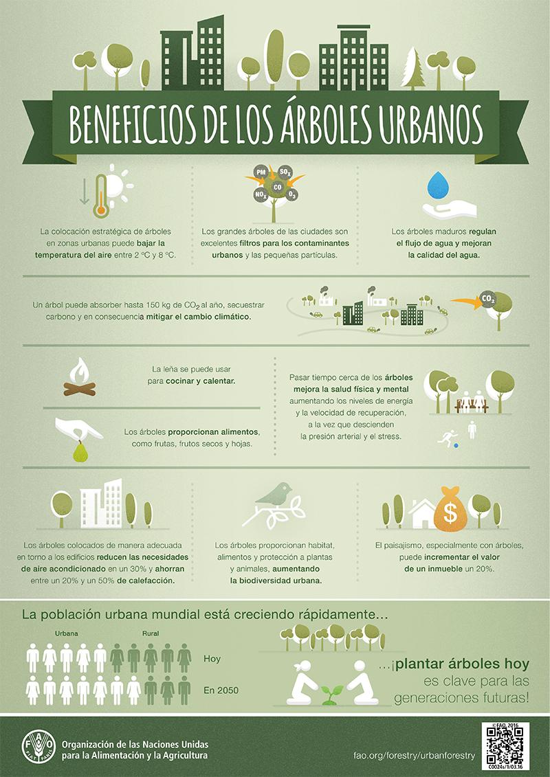 Beneficios de los rboles urbanos for Cuales son los arboles perennes