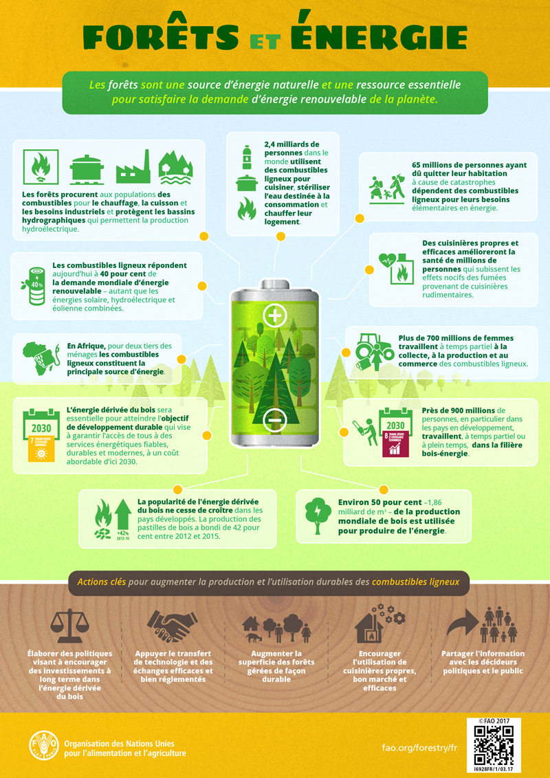 [Infographies] FAO (Organisation des Nations Unies pour l'alimentation et l'agriculture) FAO-infographic-Forests-and-Energy_fr