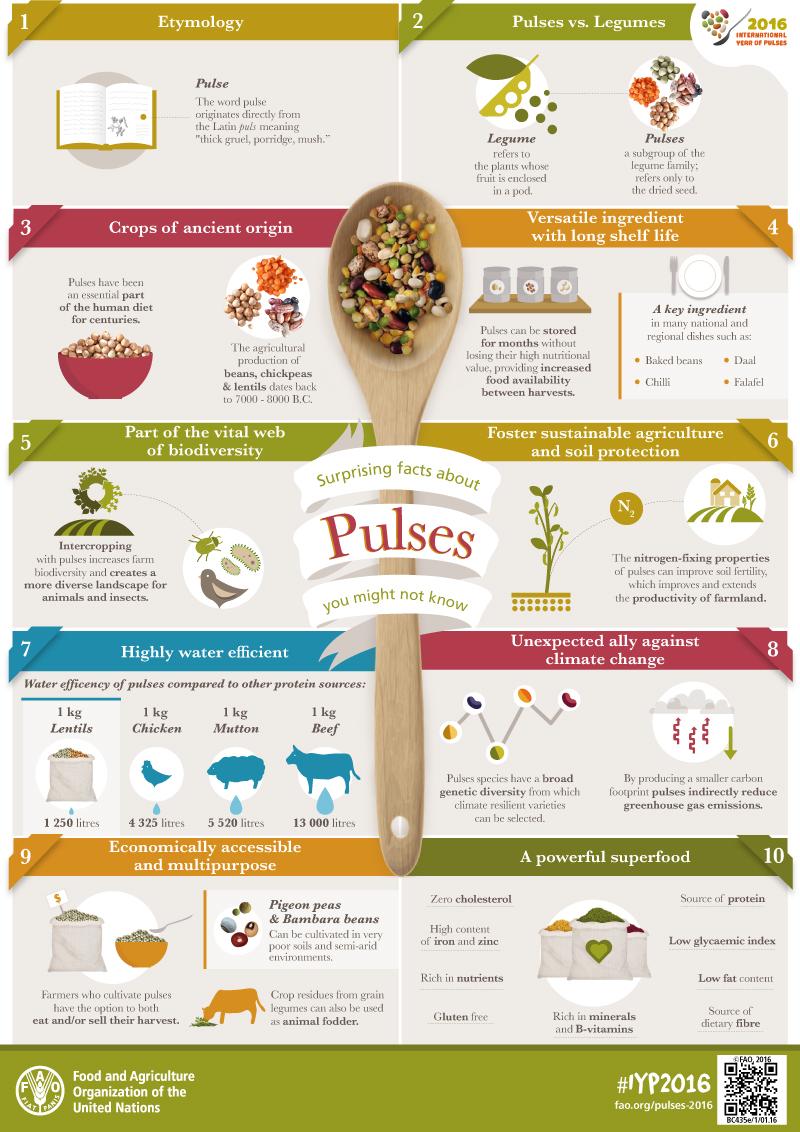 Image result for legume infographic