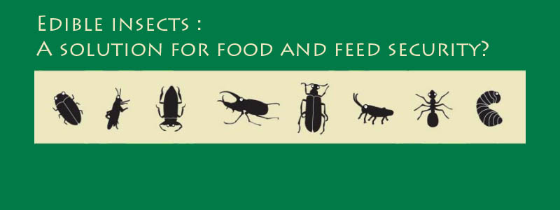 Field study of insects