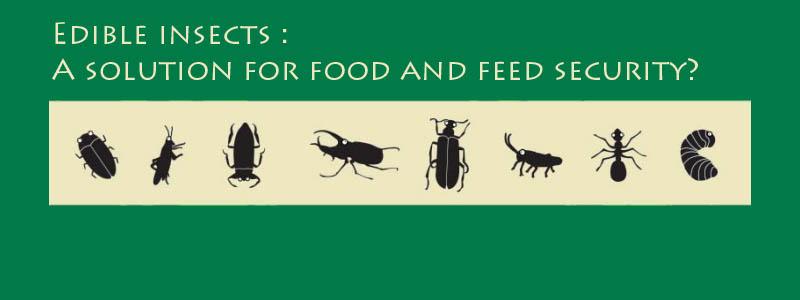 Study in bugs