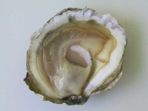 Inside of oyster
