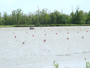 Crawfish pond near the end of the harvesting season