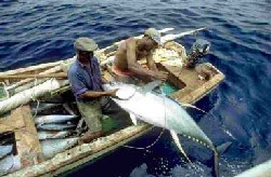 Fao fisheries aquaculture small scale fisheries for Mlf fishing scale