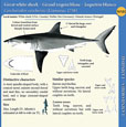 North Atlantic sharks relevant to fisheries management – A pocket guide
