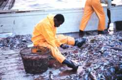 Sorting catch from the discards which require appropriate disposal
