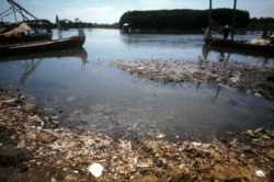 Water pollution destroys aquatic habitats