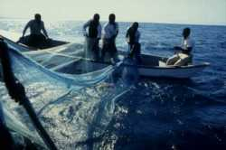 Nets lost at sea can continue fishing