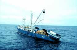 Spanish tuna purse seiner