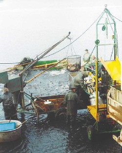 Fishermen hauling in their catch