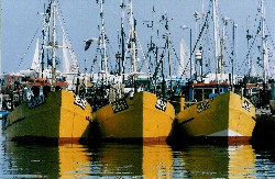 Docked fishing vessels