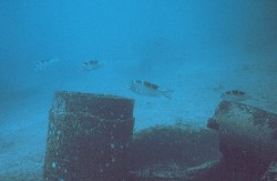 A typical school of the sparid, Montaxis grandoculis (Mu), circling an artificial reef. This fish primarily eats molluscs