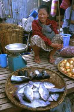 Women play an important role in artisanal fisheries. Among other things, they often sell the fish at market