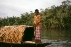 A shrimp fry collector in Bangladesh. It is important that aquaculture finds alternatives to capturing seed from the wild