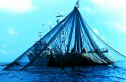 Net being laid on the stern of a purse seiner