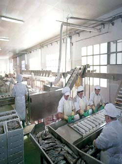 Automated process of seafood products