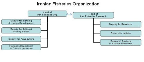 Figure 14- Organizational Chart of Iranian Fisheries Organization and Iranian Fisheries Research Organization