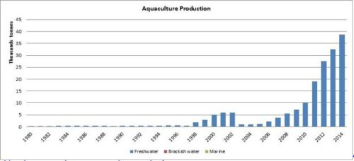 Figure 6 — Ghana — Aquaculture production