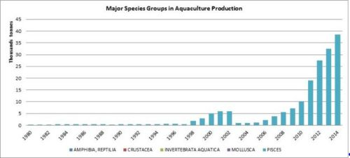 Figure 7 — Ghana —Major species groups in aquaculture production