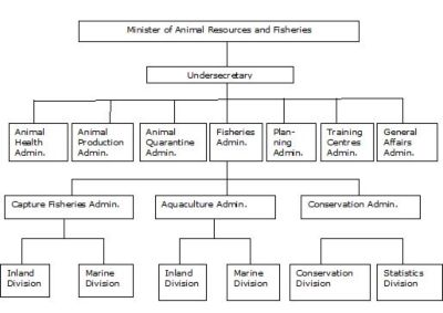 Figure 1 – Sudan – Organogram of the Fisheries Adminisration within the Ministry of Animal Resources and Fisheries