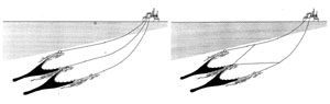 Examples of twin trawls