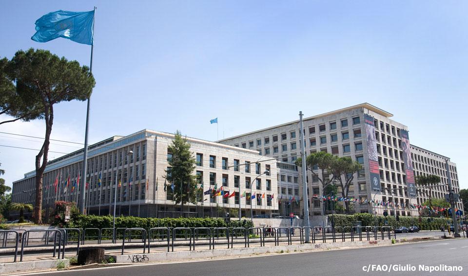 """Resultado de imagen para FAO Headquarters"""""""