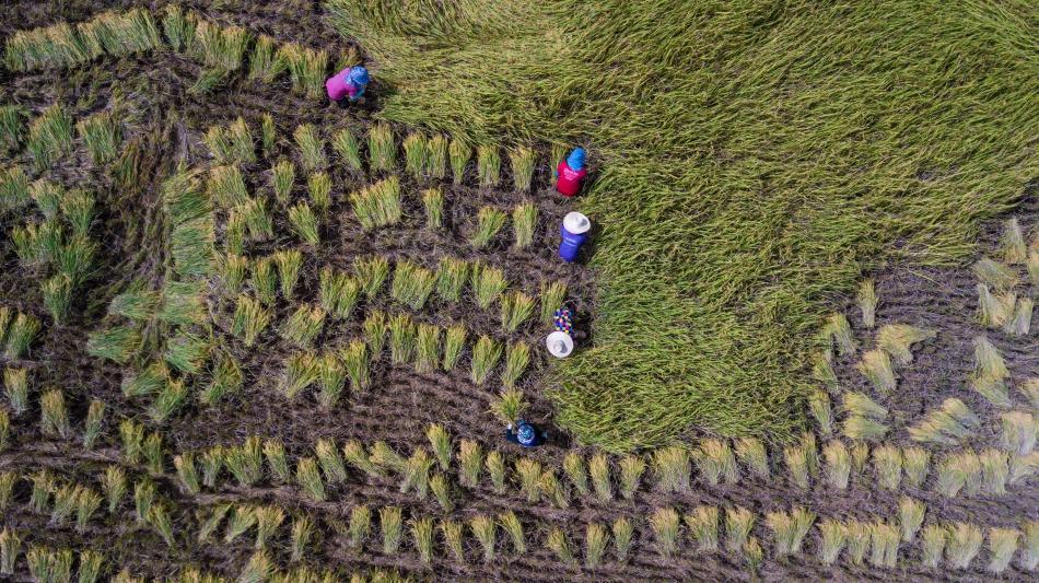El cambio climático está poniendo en riesgo los medios de vida de millones de agricultores. Sin ellos, no tendríamos comida en nuestros platos, son nuestros héroes #HambreCero y necesitan nuestro apoyo. ©Surasak Saenjai /Shutterstock