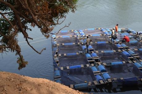 Jaulas flotantes tesoros escondidos piscicultura for Jaulas flotantes para piscicultura