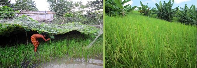 Bangladesh Farm