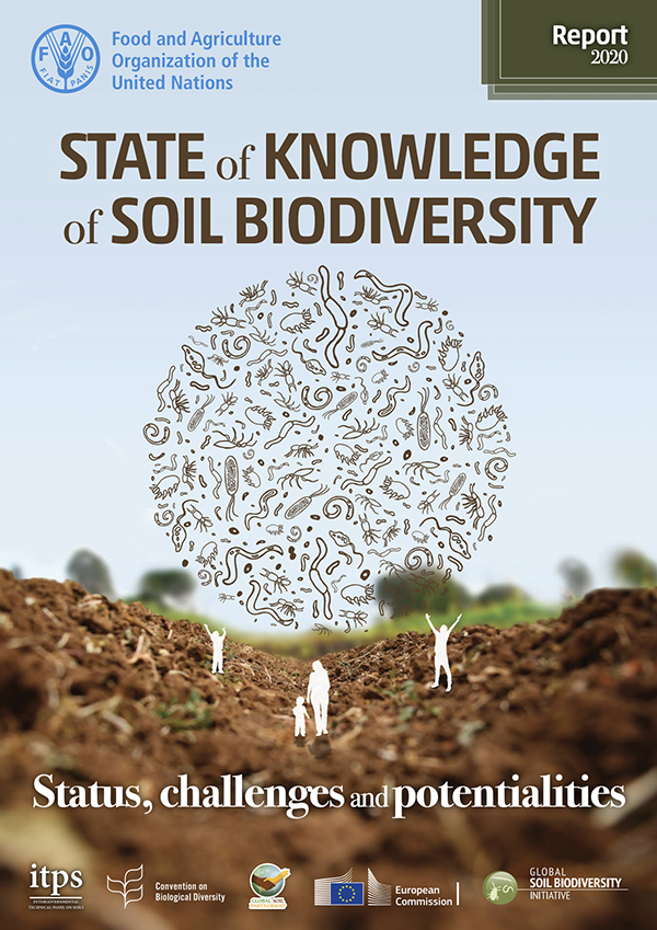 State of knowledge of soil biodiversity