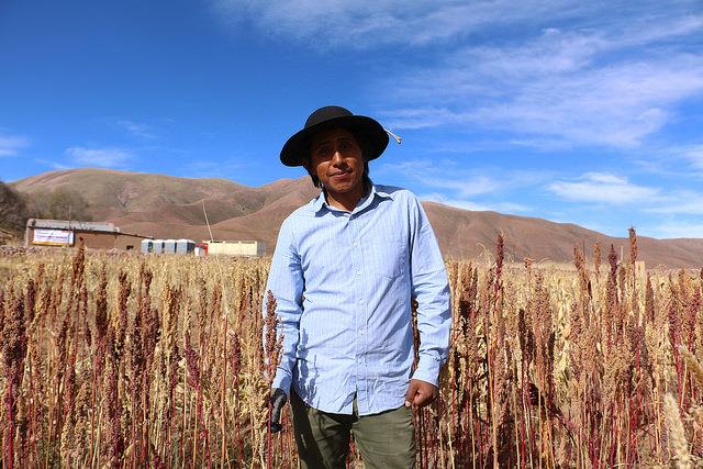 Quinoa field in Jujuy, Argentina