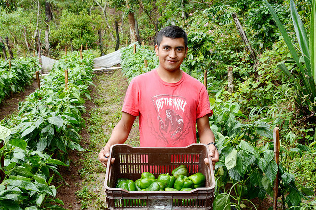 Honduras provides organic products to more than 26 countries