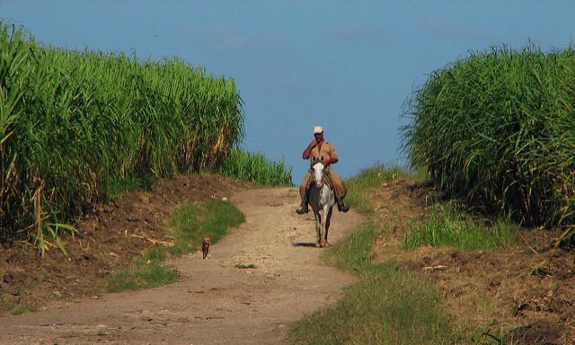 Guajiro on a horse with companion dog